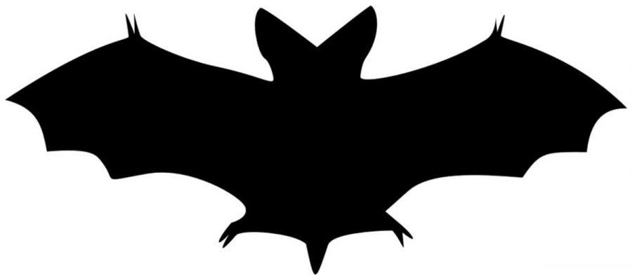 Bat Boy: A few final thoughts