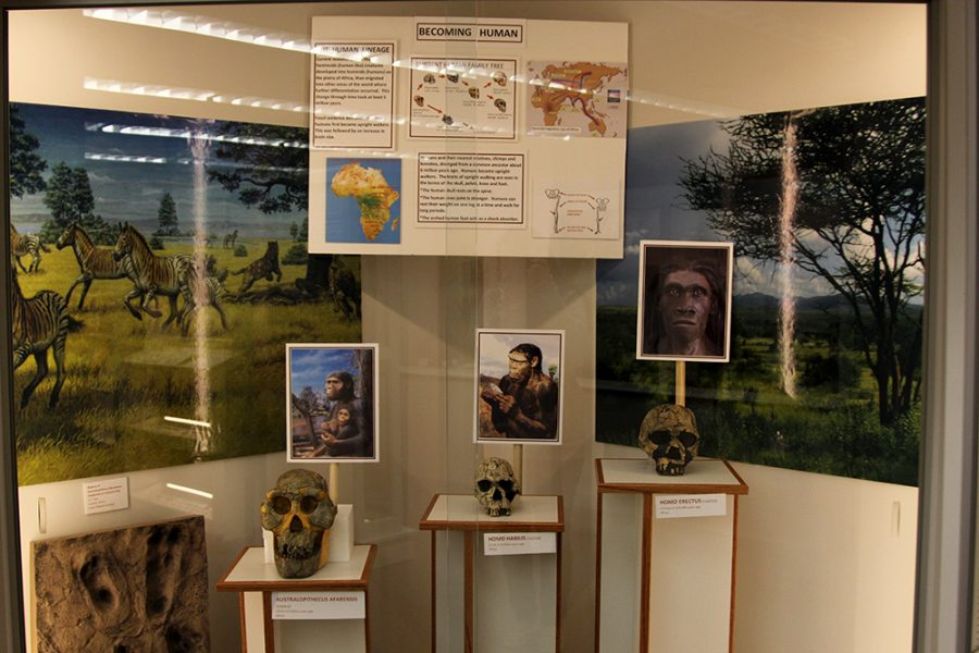 The Museum of Anthropology had its grand opening on Oct. 4. It has objects from southwest United States, Bulgaria and other countries on display. The museum is located in Connell Hall.