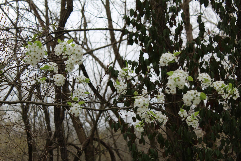 Spring+photos
