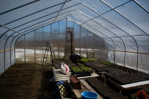 """Greenhouse Interior"" by bert_m_b is licensed with CC BY 2.0. To view a copy of this license, visit https://creativecommons.org/licenses/by/2.0/"